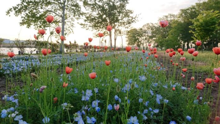 【コラム】春♡春♡春