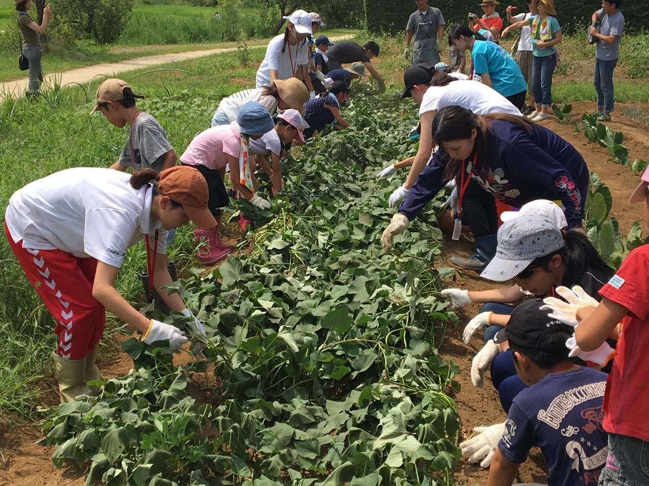 祓川ゼミ 小学生と農業体験!② その1 収穫