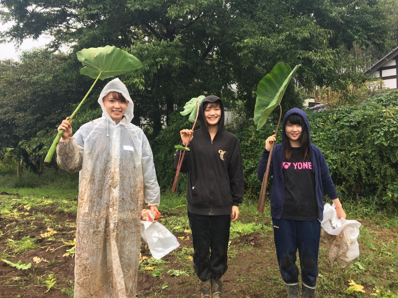 祓川ゼミ 小学生と農業体験④ 最終回 大雨の中収穫