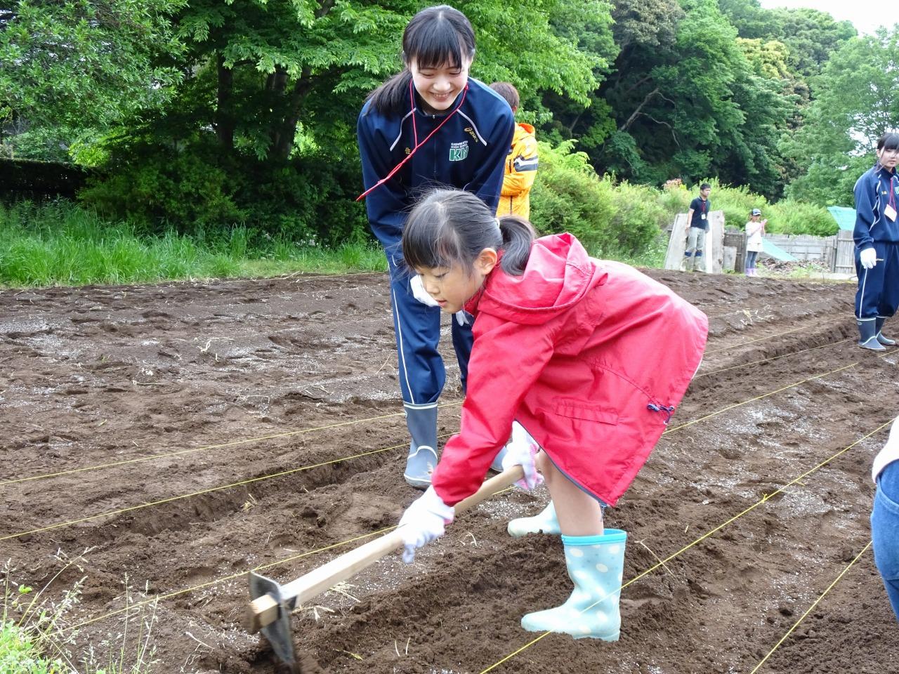 祓川ゼミ 小学生と農業体験!①畝立て・種植え