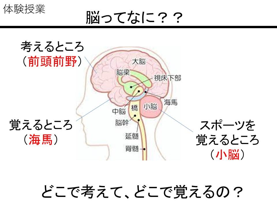良い先生になるために子どもの脳を理解しよう~お医者さん教員による授業~