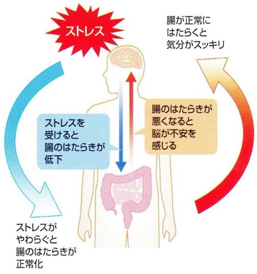 受験生応援:腸内環境を整えて試験で最高のパフォーマンスを!~乳酸菌の力