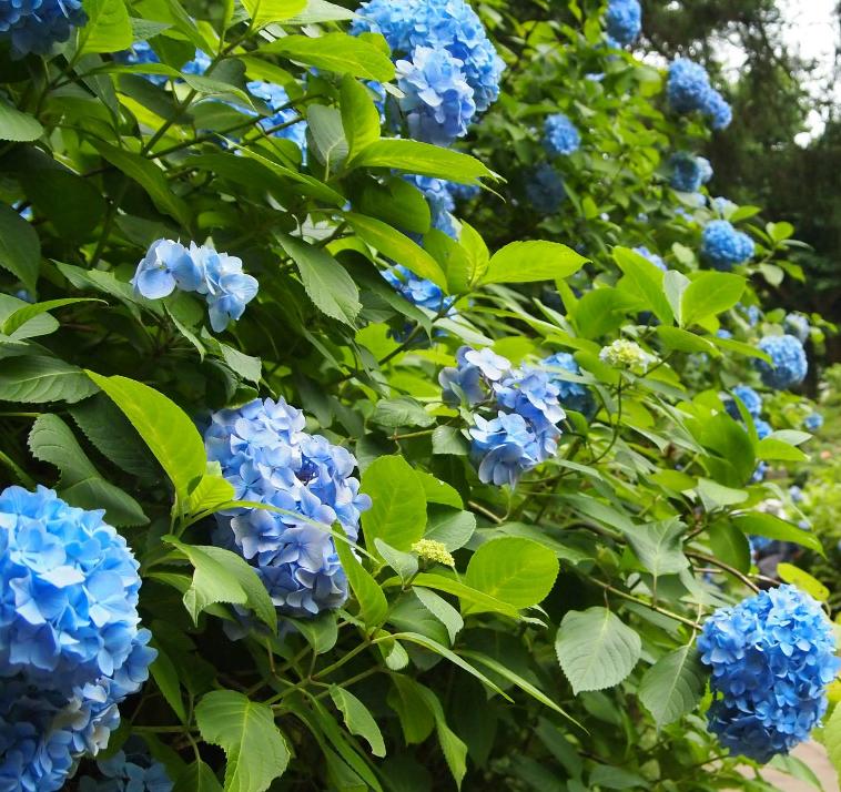 6月10日オープンキャンパス  雨ニモ負ケズ、決めましょう!!